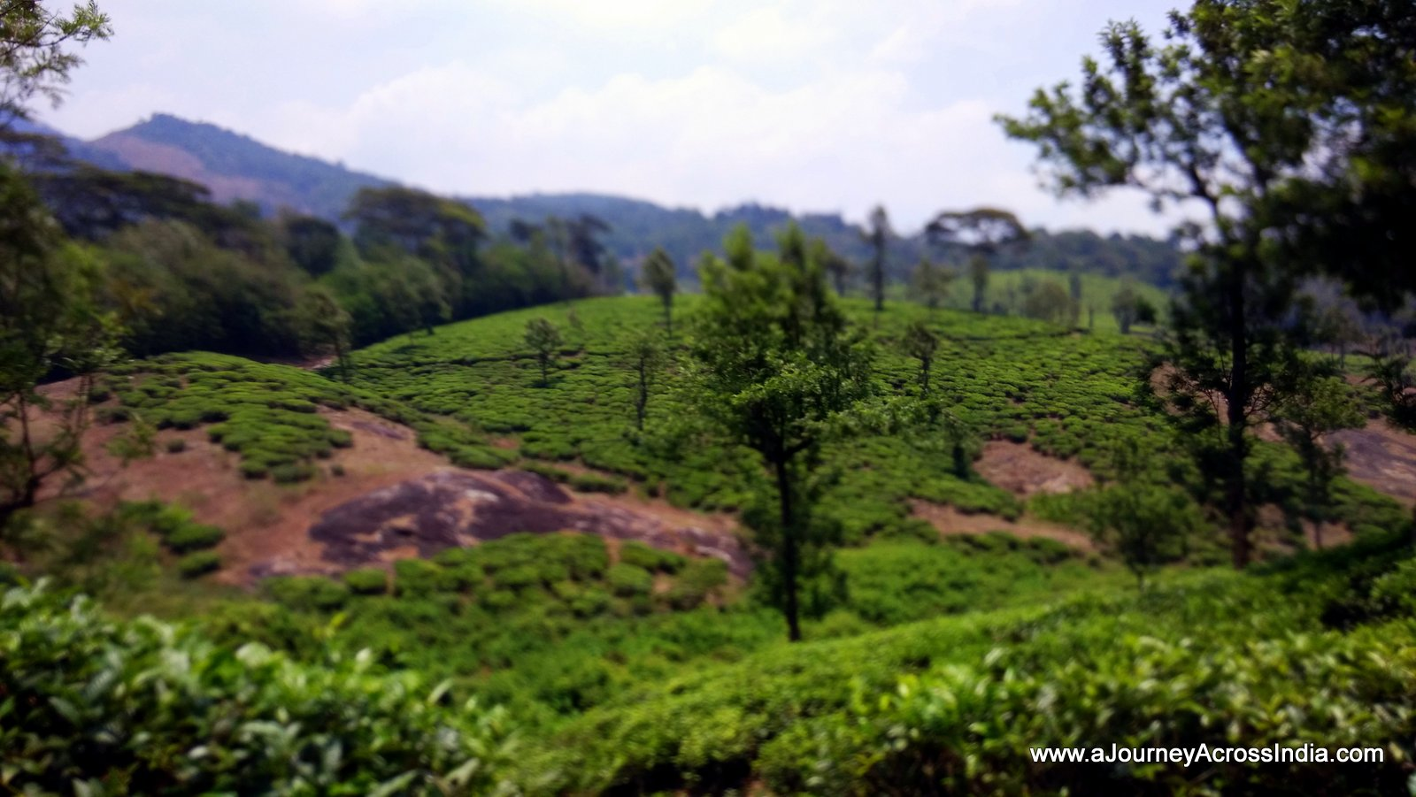 Nelliyampathy Tea Estate